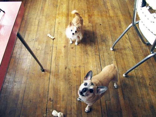 Pups Want Bread // take a megabite