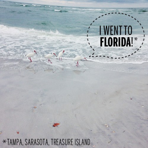I went to Florida! // take a megabite